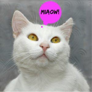 Obligatory white cat-2